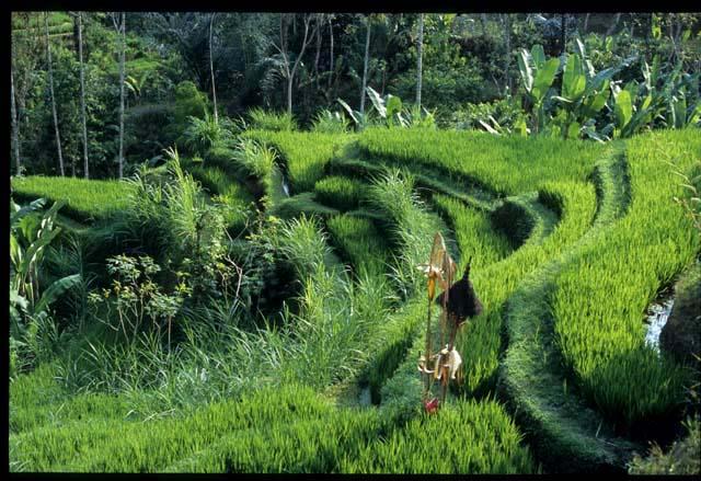 bali flora and fauna