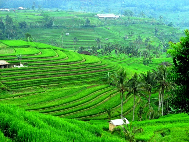 BALI TRAVEL PACKAGE/jatiluwih rice field