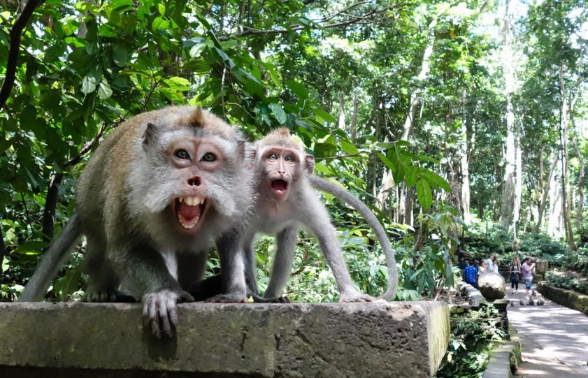 mongkey-forest-ubud