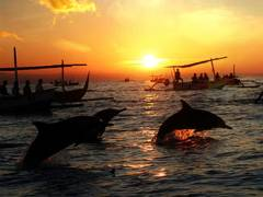 DOLPHIN TOURS IN BALI