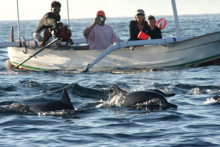 lovina-dolphin-tour
