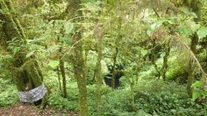 Mount lesung hiking bali