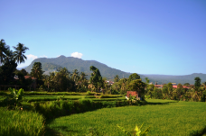 rice-field-view-at-sekumpul-village-bali-jungle-trekking