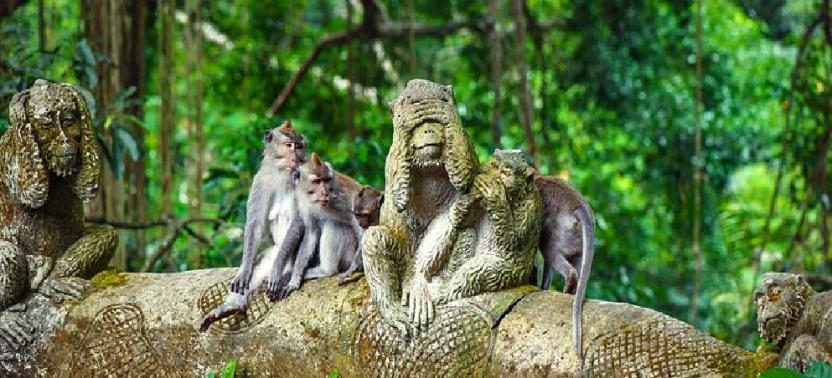 ubud-mongkey-forest