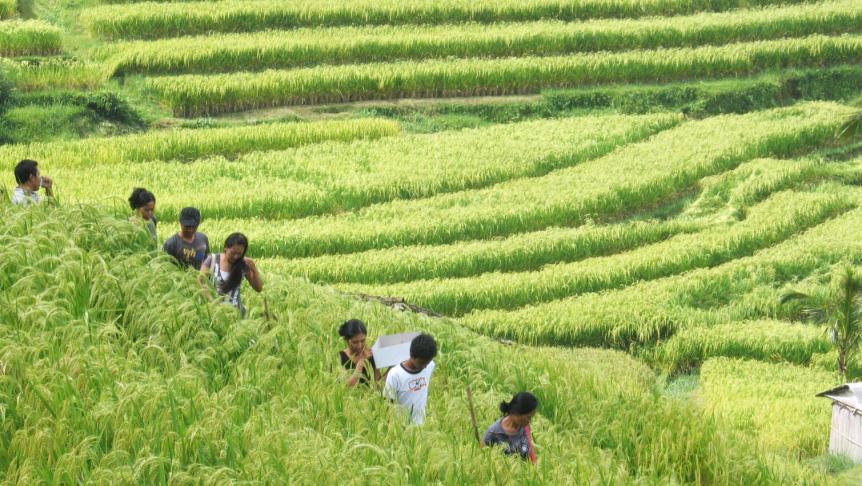 walking-tour-to-jatiliwuih-rice-field