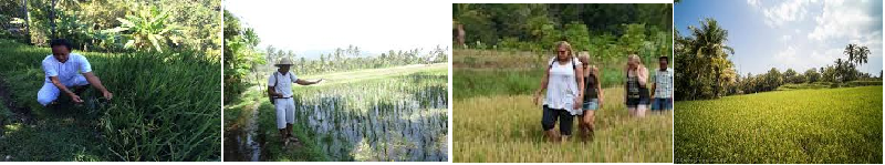 BALI RICE FIELD TREKKING TOURS