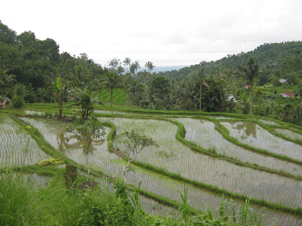 sambangan waterfall and rice field bali