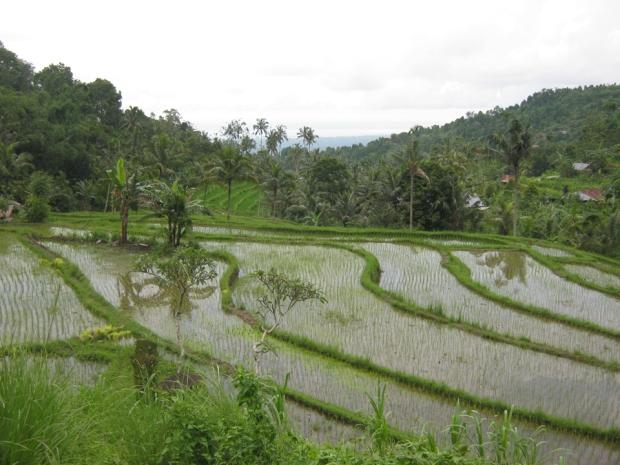 sambangan waterfall and rice field bali