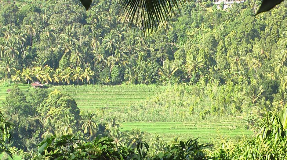 mayong-village-bali