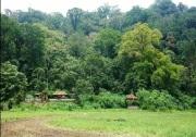 Jungle in bali