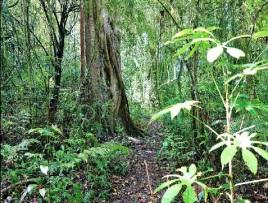 jungle tour in bali