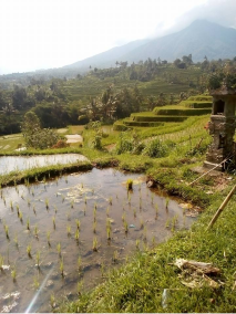 best rice field in Bali
