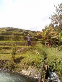 best rice terrace in Bali