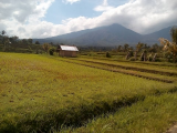 hiking around Jatiluwih Rice field with Bali Jungle Trekking