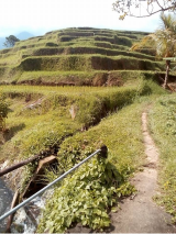 Jatiluwih rice field hike with Bali Jungle Trekking Guide