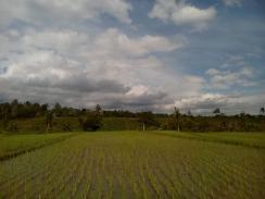 trekking around Jatiluwih Rice field with Bali Jungle Trekking