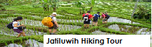 Jatiluwih rice field hiking and trekking tour package