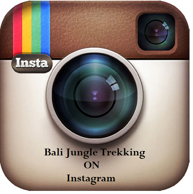 Bali Jungle Trekking On Instragram