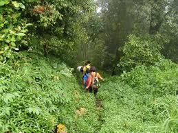 bali jungle walking tour