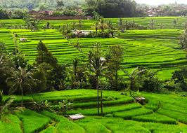 best waking tour package in bali