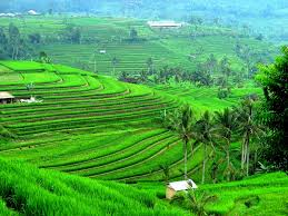 top bali walking tours