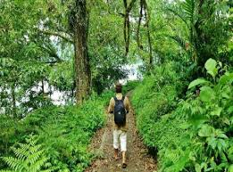 walking tour to the jungle of bali