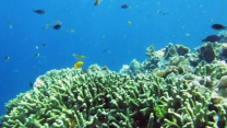 Best Snorkeling in Bali with Bali Jungle Trekking'