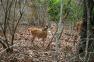 Trip to west of Bali to see Balinese Protected deers