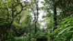 Best Rainforest Jungle in Bali