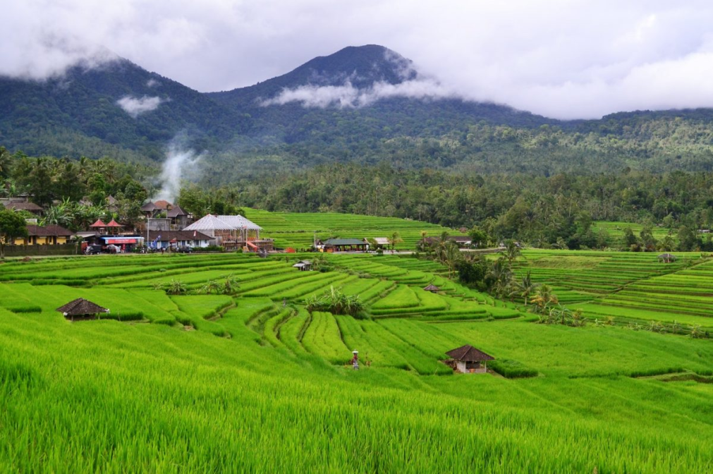 best-rice-field-in-bali
