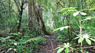 Hiking route in the jungle of Tamblingan