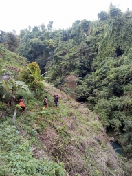 Hiking to visiting sambangan waterfalls with Bali Jungle Trekking Team Guide