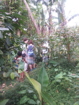 Learn about coffee with Bali Jungle Trekking