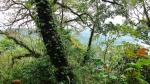 Tamblingan Jungle hiking