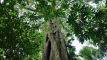 The Jungle of Tamblingan is one of the protected forest in Bali