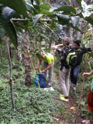 trekking-thru-coffee-plantation-in-munduk-village
