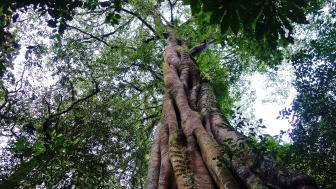 What you can see during Tamblingan jungle Trek