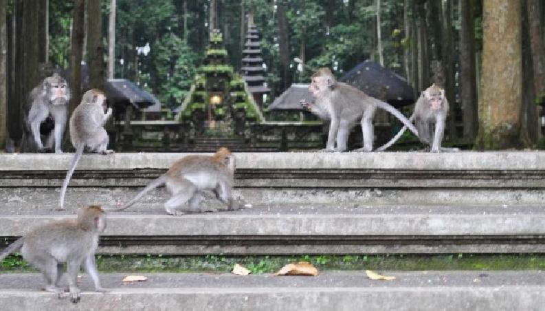 alas-kedaton-temple