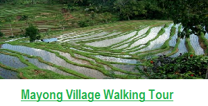 BALI RICE FIELD TREKKING PACKAGE