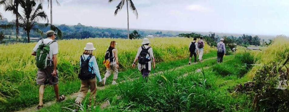 jatiluwih-trekking-tour