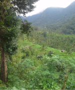 Rice field view in Sekumpul Village Bali