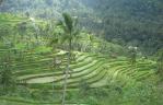 Sekumpul village is a best place that you must visit during your Holiday in Bali