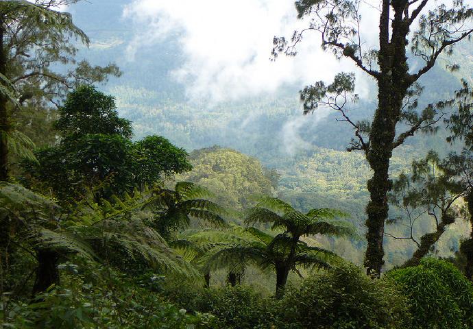 mount-abang-trekking-review