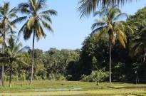 nice rice field view at Mayong Village Bali