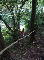 Hiking in the jungle to visit cemara waterfalls Bali