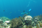 3 Days 3 Nights Trekking Package - Snorkeling in West Bali