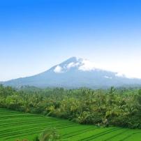 Belimbing Rice Terrace Bali