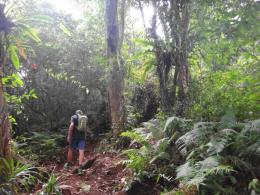 Trekking trips to Pucak Maggu