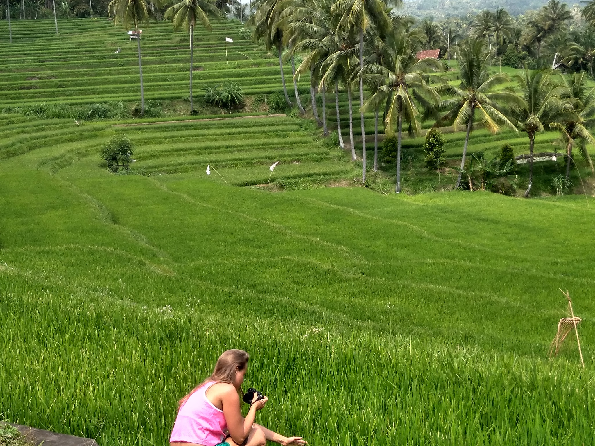 Mayong Village Rice Field