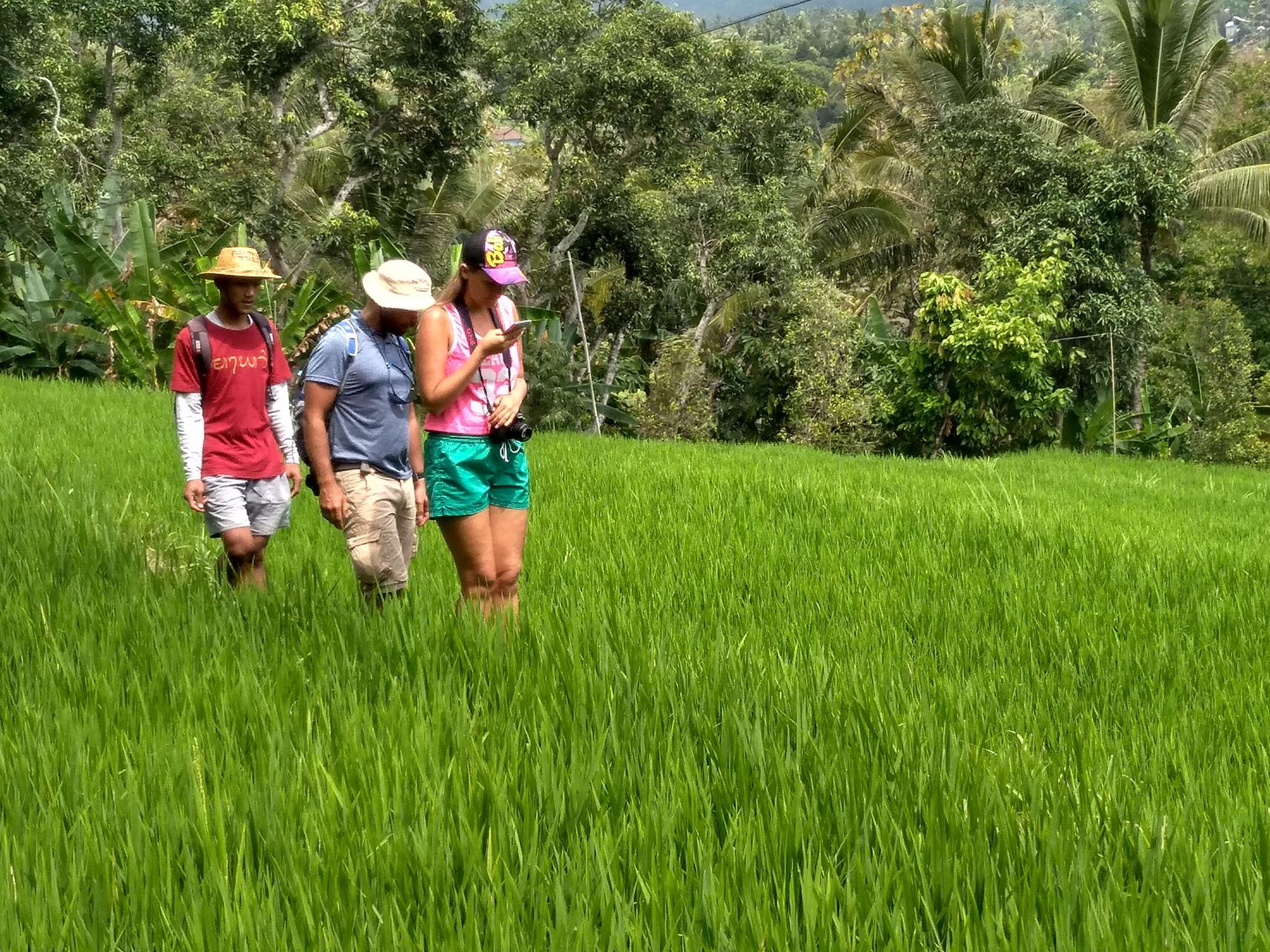 Walking on Mayong Village RicePaddies